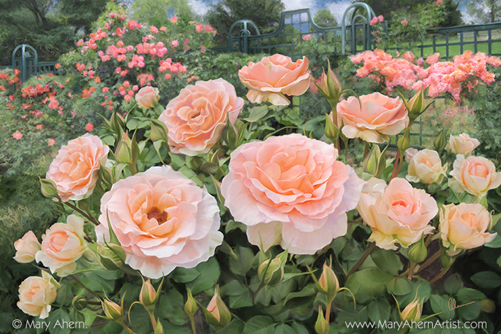 Peggy's Rose Garden