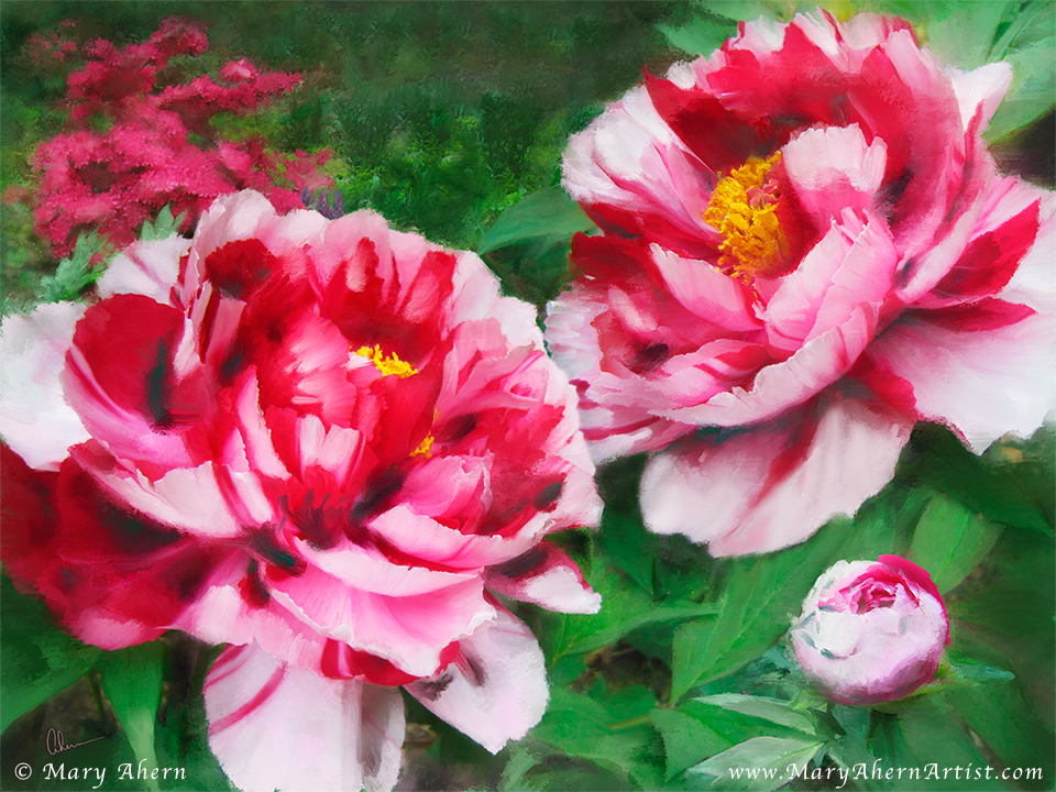 Fire Flame Peony. Painting by the artist, Mary Ahern