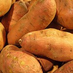 Ipomoea batatas - Sweet Potatoes
