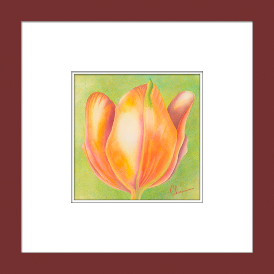 Orange Tulip matted and framed.